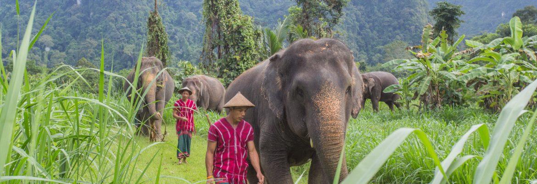 Elefanten Schutzprojekt im Khao Sok Nationalpark