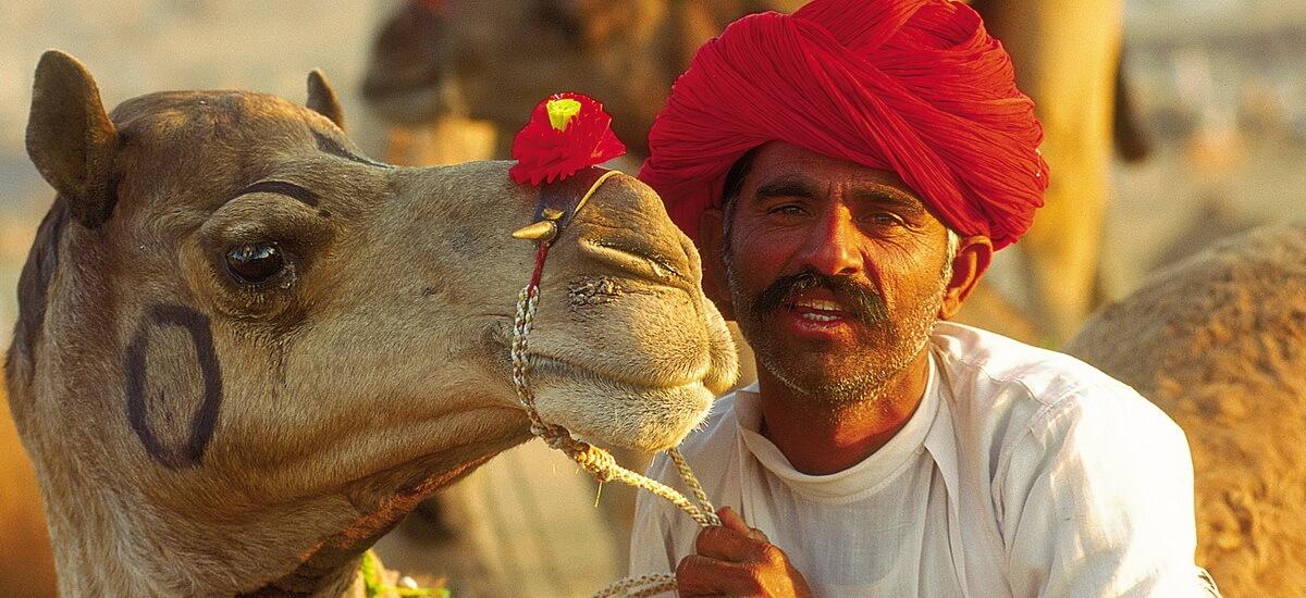 Besonders in Indiens Wüstengebieten rund um Jaisalmer in Rajasthan sind Kamele unerlässliche Nutztiere.