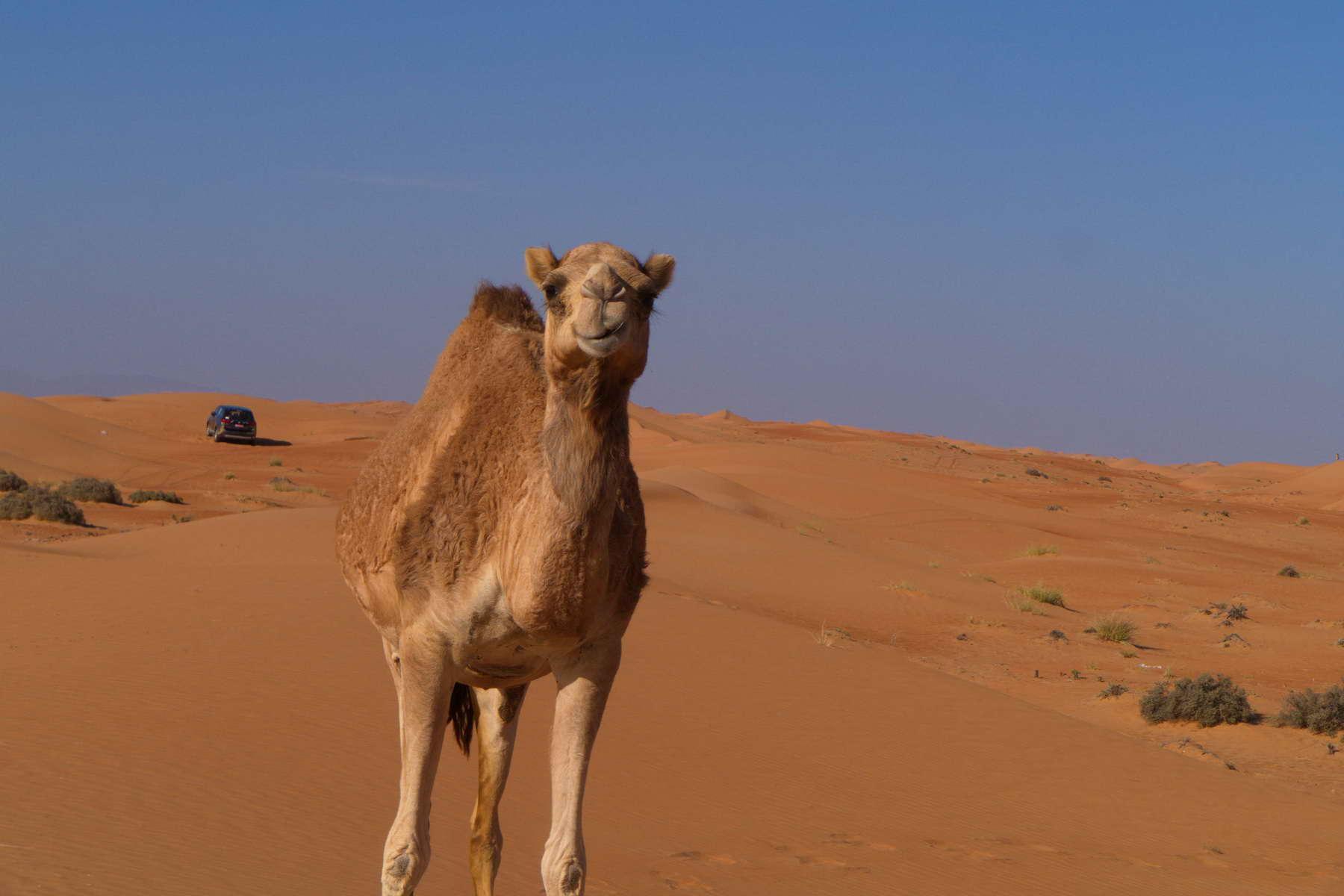 Oman Reisetipps von den Oman Experten