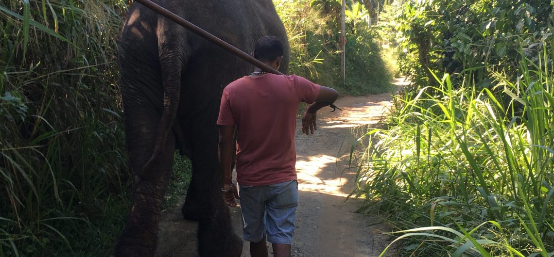 Sri Lanka Elefant Freedome Projekt Spaziergang mit dem Elefanten und Mahut
