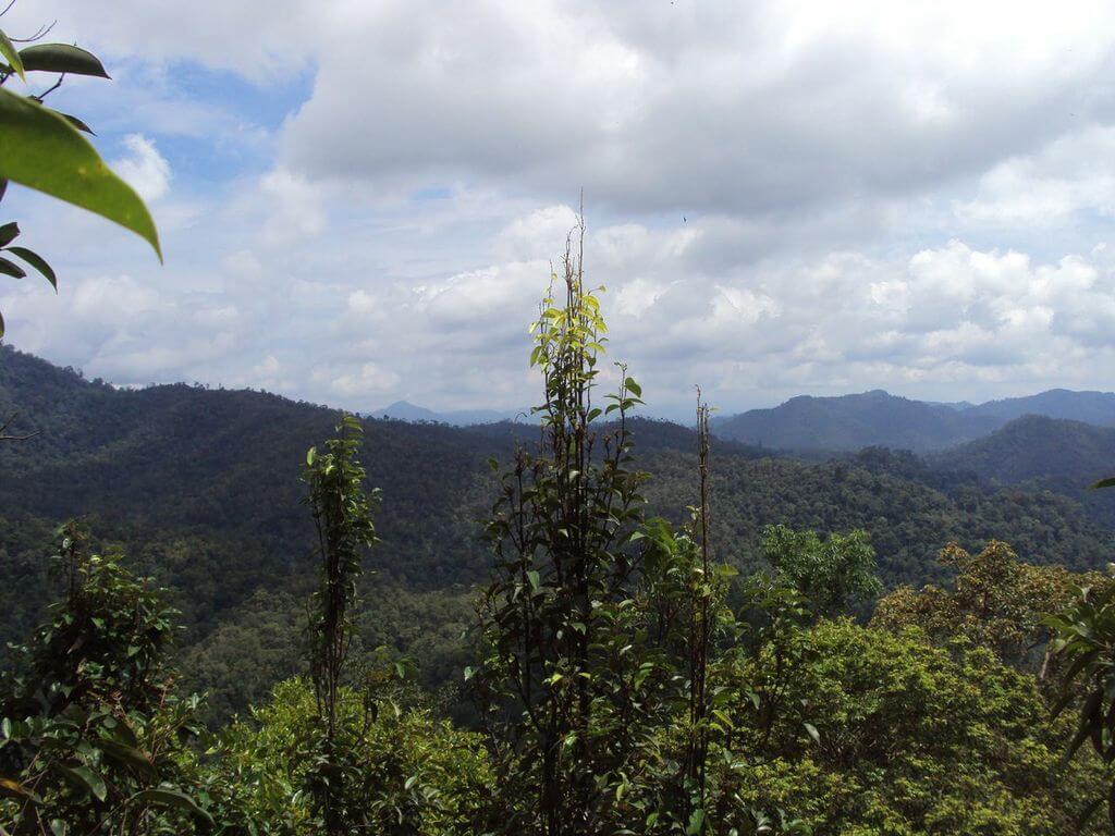 Ausblick auf den Dschungel von Kalimantan