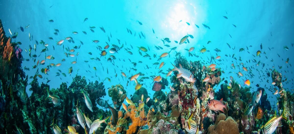 Die Balisee ist bekannt für ihre spektakuläre Unterwasserwelt mit seltenen Fischarten, Riesenschildkröten und farbenprächtigen Korallenriffen.