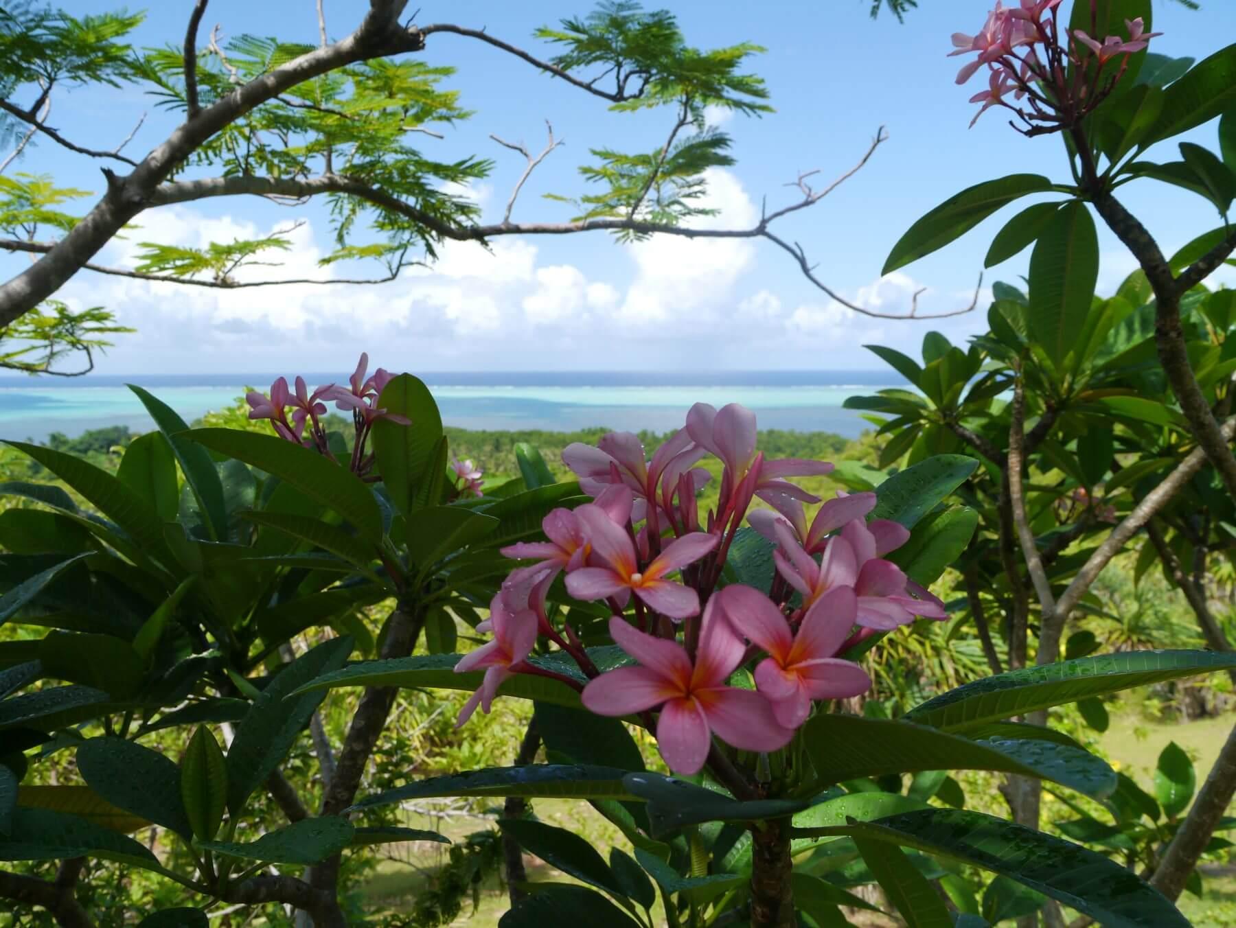 Hellrosane Blüten an einem Baum.