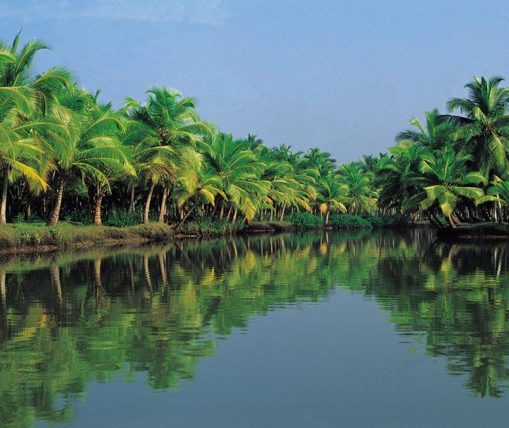 Die Backwaters sind ein verzweigtes Wasserstraßennetz im südindischen Bundesstaat Kerala, dass sich auf einer Fläche von 1900 km² von Kochi bis Kollam erstreckt.