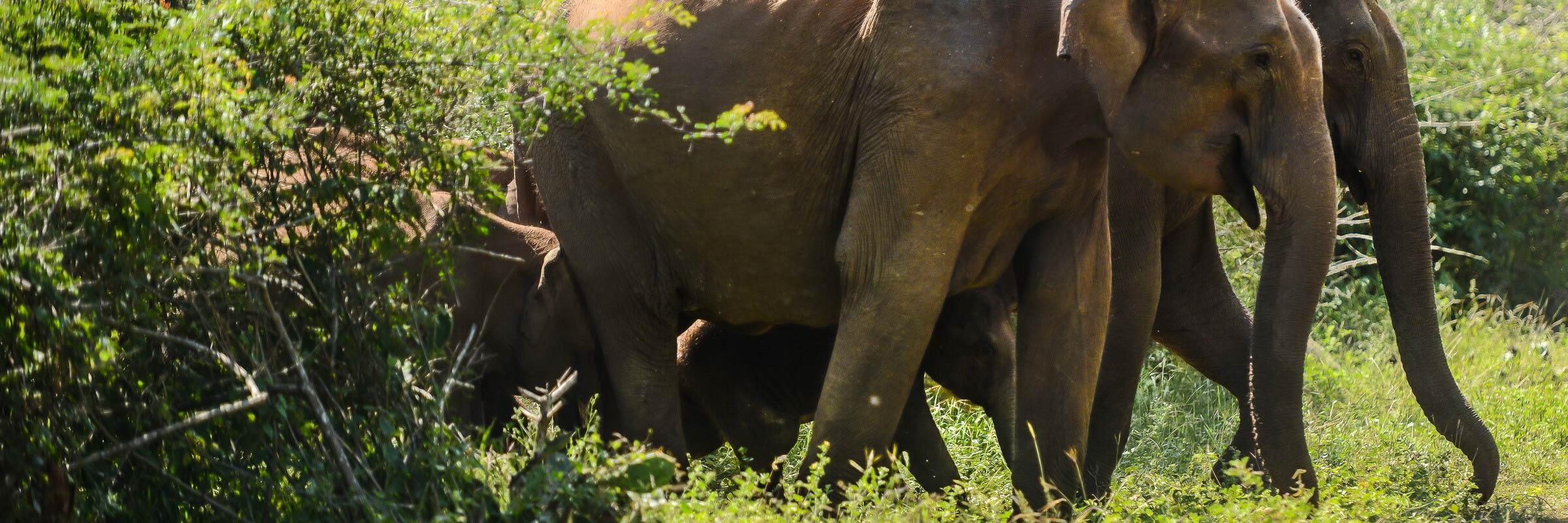 Der Nagarhole Nationalpark ist ein Schutzgebiet im südindischen Bundesstaat Karnataka, in dem Elefanten in freier Wildbahn beobachtet werden können.