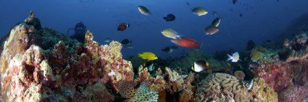 Die faszinierende Unterwasserlandschaft rund um die Insel Tioman begeistert mit farbenprächtigen Korallen und einer großen Artenvielfalt an exotischen Fischen.