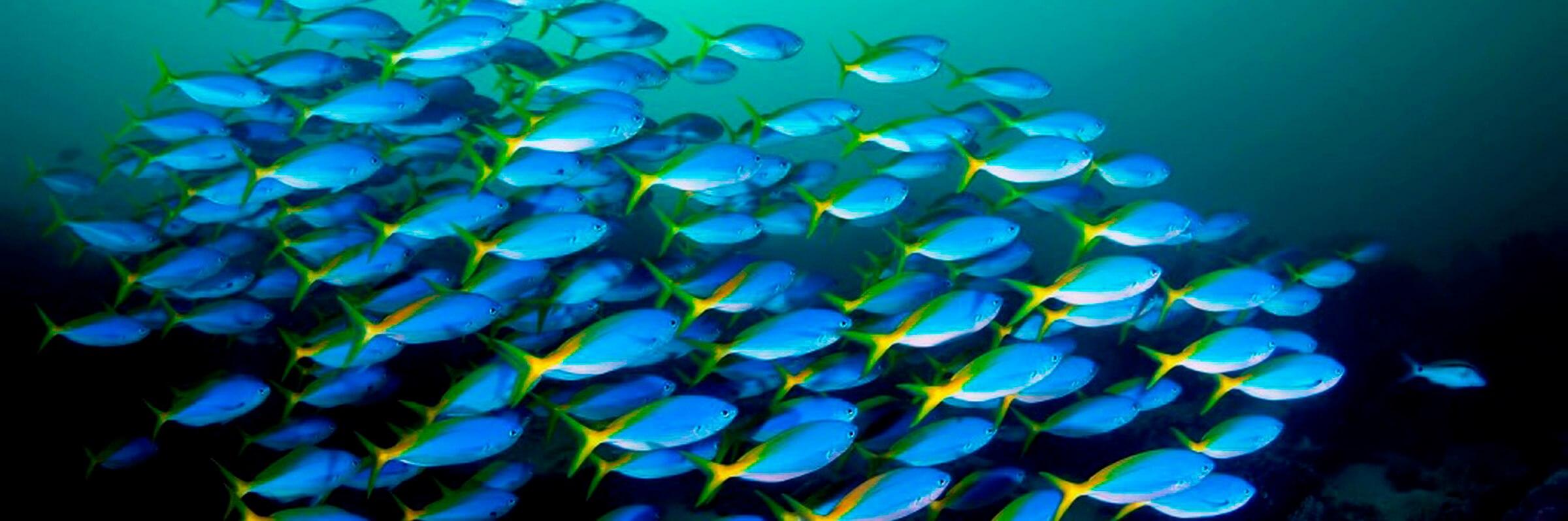 Von der Derawan Dive Lodge aus sind per Boot auch weltbekannten Tauchspots wie Sangalaki, Big Fish Country oder der Jelly Fish Lake in Kakaban erreichbar.