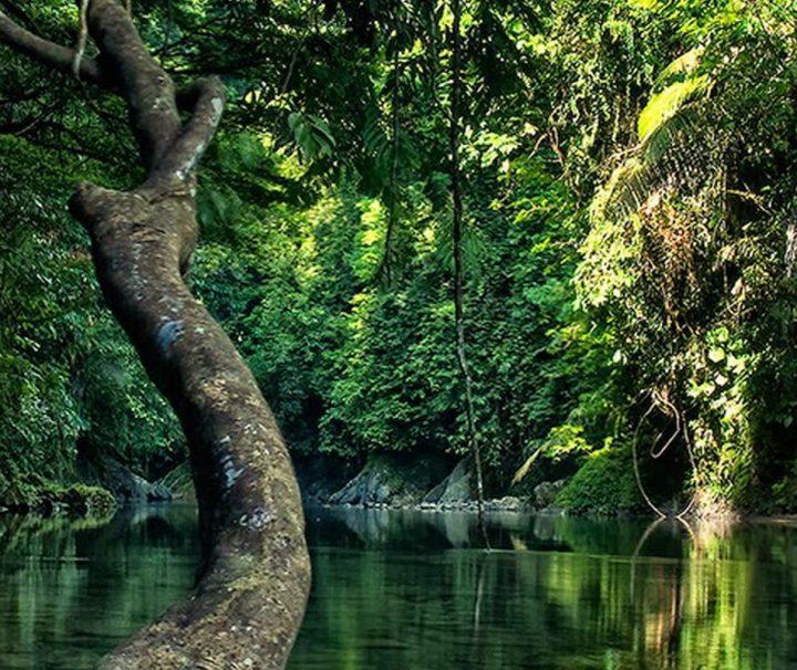 Mit einer Fläche von etwa 9.000 km² ist der Gunung Leuser Nationalpark eines der größten Naturreservate Indonesiens.