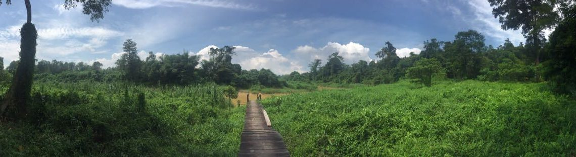 Naturpanorama im Kutai Nationalpark in Kalimantan