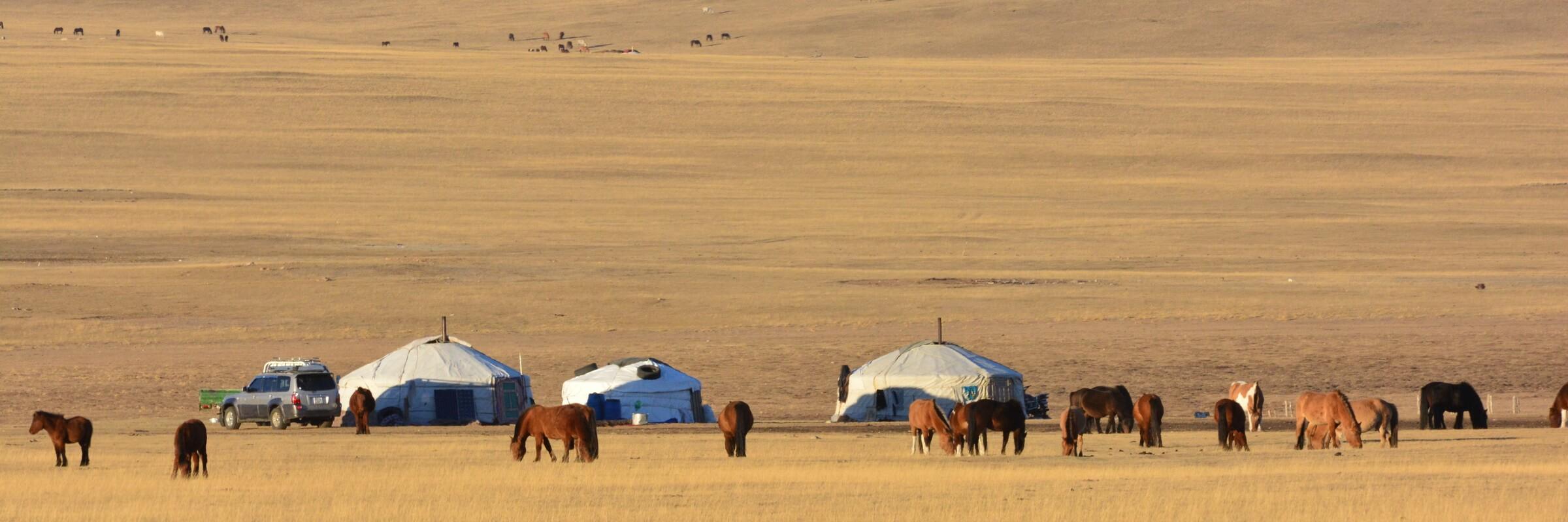 Ein großer Teil der mongolischen Bevölkerung besteht aus Nomaden, die mit ihren Jurten durch das Land ziehen, viele verdienen ihren Lebensunterhalt mit der Pferdezucht.