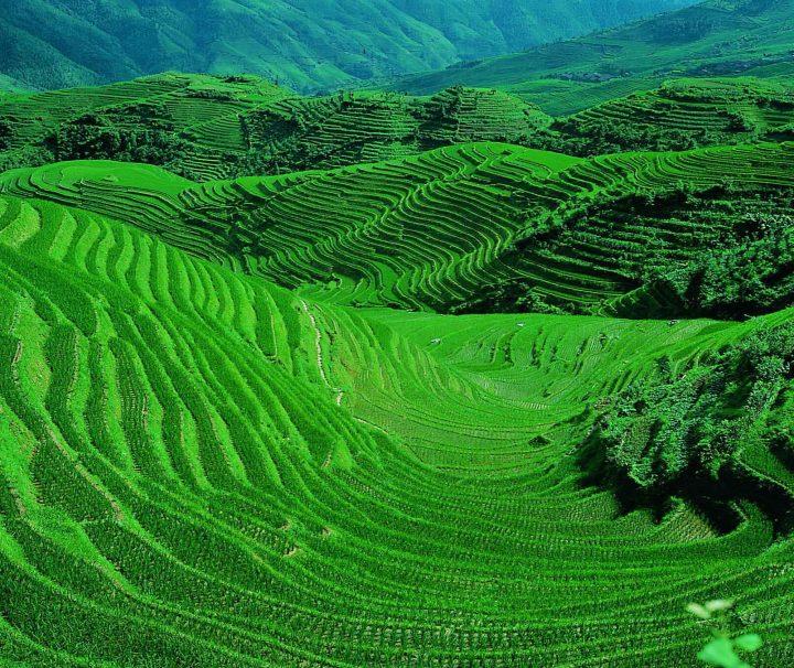 Hunderte Jahre lang haben in Yuanyang verschiedene Volksgruppen auf den Hängen des Ailao-Gebirges endlose Terrassen angelegt, um dort Reis anbauen zu können.