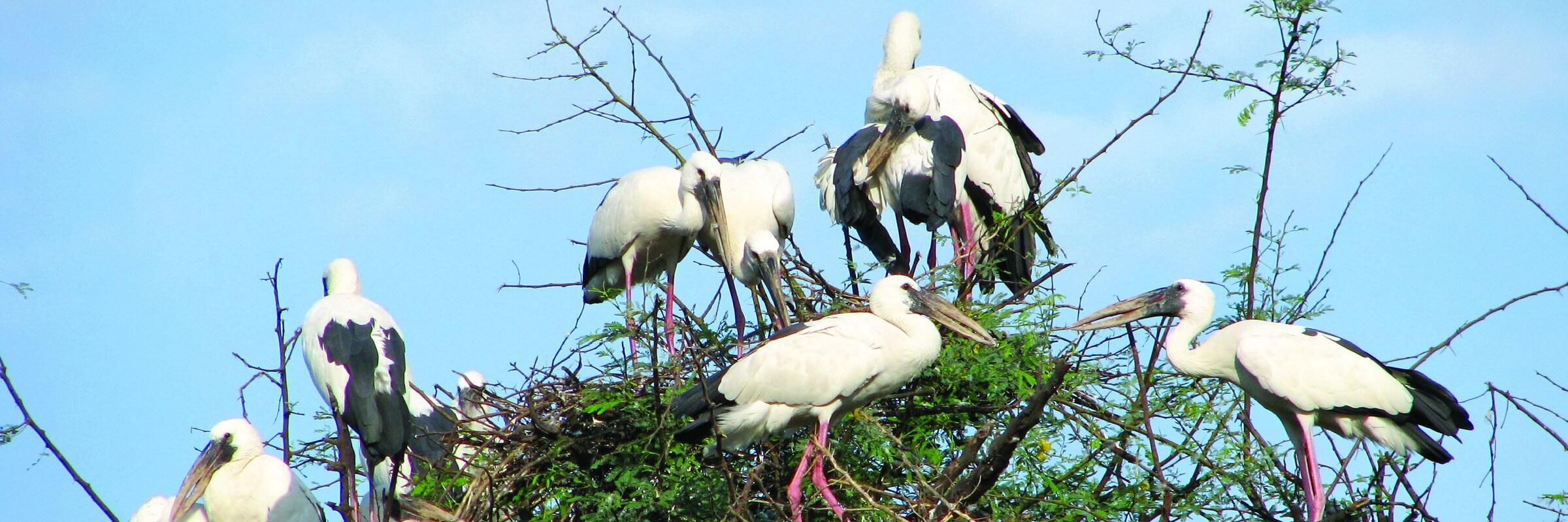 Der Keoladeo-Nationalpark bei Bharatpur war einst ein Entenjagdgebiet und beherbergt heute über 364 Vogelarten.