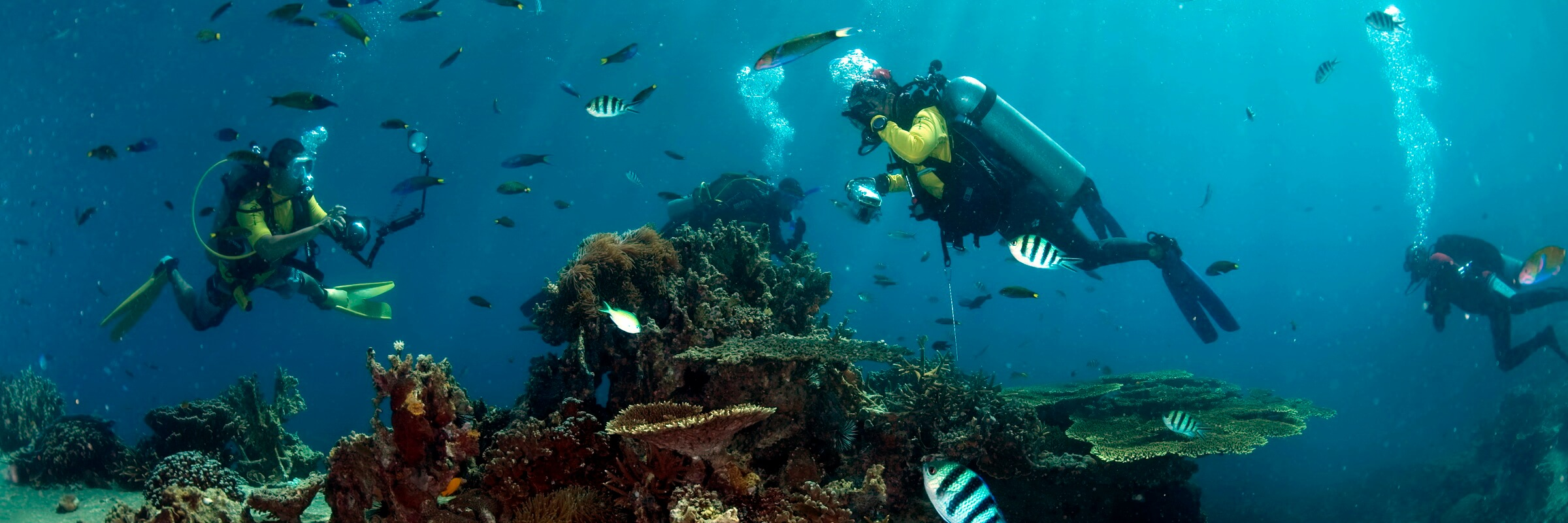 Die farbenfrohe Unterwasserwelt in den Gewässern rund um Tioman begeistert selbst erfahrene Taucher.