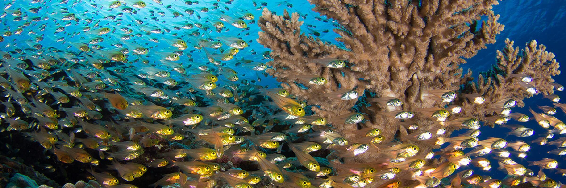 Die farbenprächtige Unterwasserflora und -Fauna rund um Yap beeindruckt selbst erfahrene Taucher.