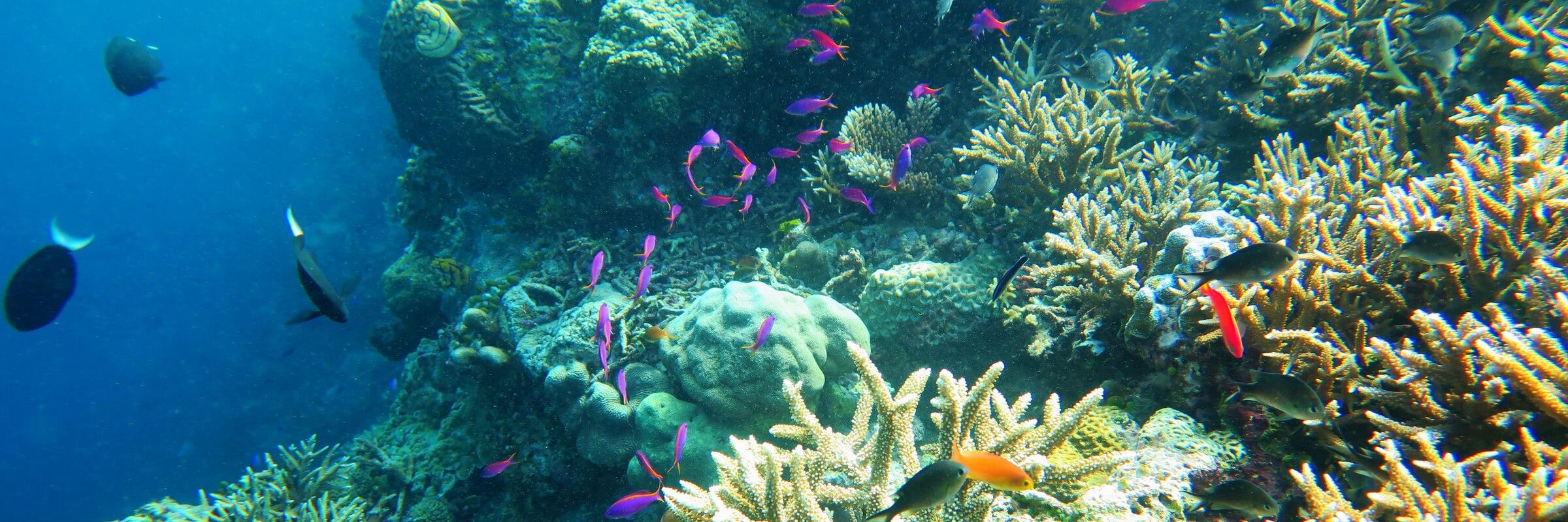 Die Gewässer rund um das Virgin Cocoa sind bekannt für ihre farbenprächtige Unterwasserwelt mit reichhaltiger Flora und Fauna.