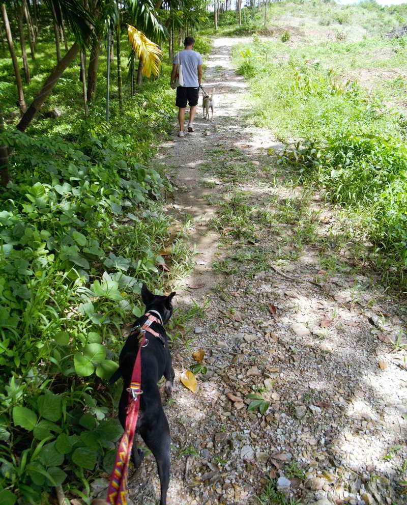 Mit den Hunde aus dem Tierheim spazieren gehen auf Koh Lanta macht nicht nur den Hunden Spaß!