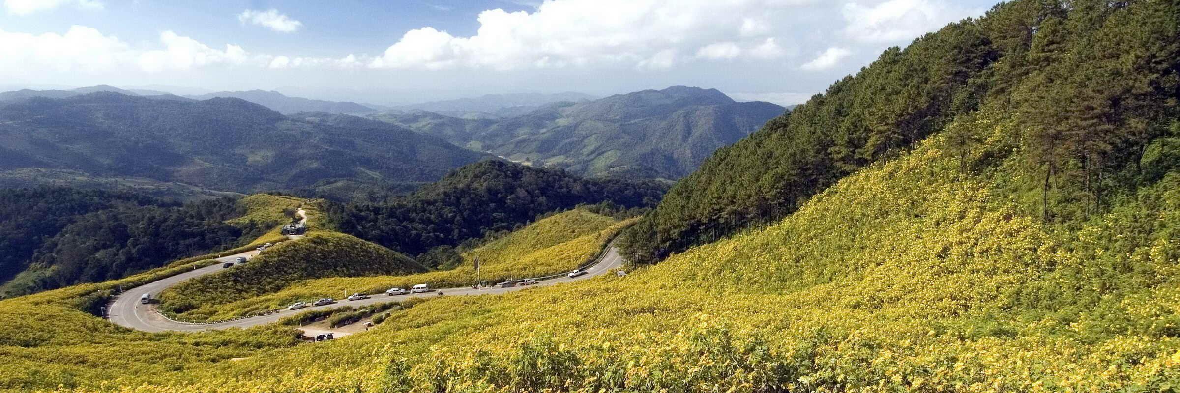 Bua Tong ist eine wildwachsende Gattung der Sonnenblume, die nur einmal im Jahr für 2 Wochen im November blüht und die Felder um Mae Hong Son gelb färbt.