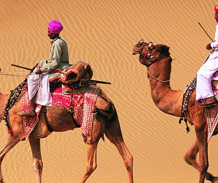 In den Wüstengebieten im nordindischen Bundesstaat Rajasthan sind Kamele nach wie vor wichtige Nutztiere und Fortbewegungsmittel.