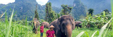 Das Elephant Hills Luxury Tented Camp kümmert sich um den Schutz der Elefanten im Khao Sok Nationalpark