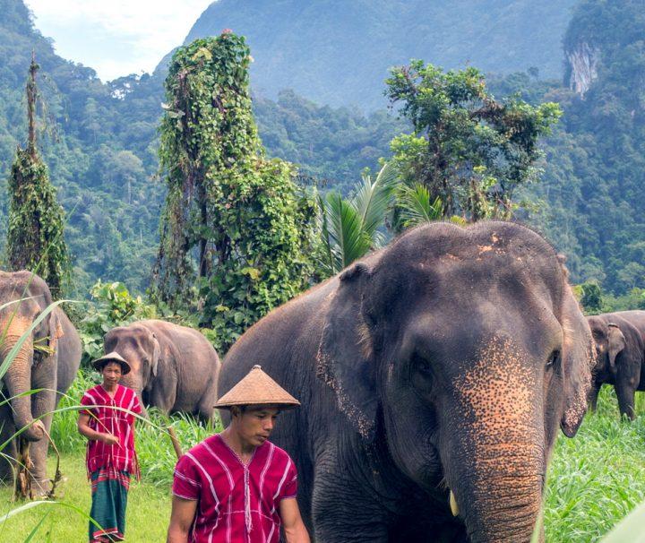 Das Elephant Hills Luxury Tented Camp kümmert sich um den Schutz der Elefanten im Khao Sok Nationalpark.