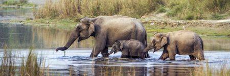 Im Chitwan Nationalpark können Besucher Asiatische Elefanten in freier Wildbahn beobachten.