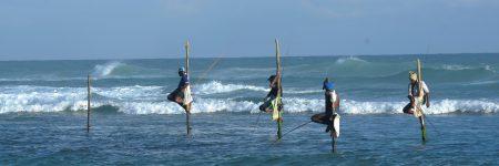 Die Tradition des Stelzenfischens wird nur in Sri Lankas Südprovinz, zwischen den Städten Unawatuna und Weligama, gepflegt.
