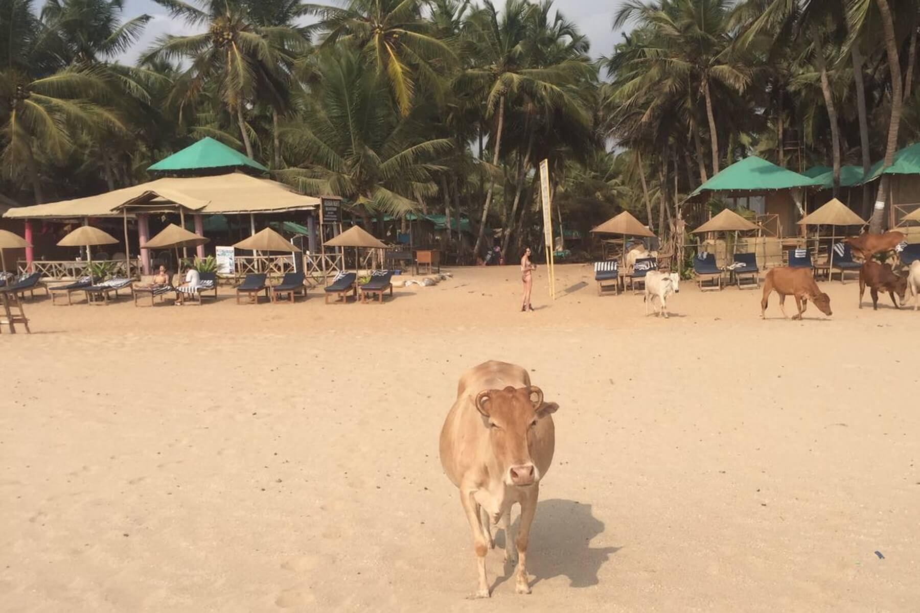 Entspannte Tage verbringen wir an den Stränden von Goa, hier Agonda Beach