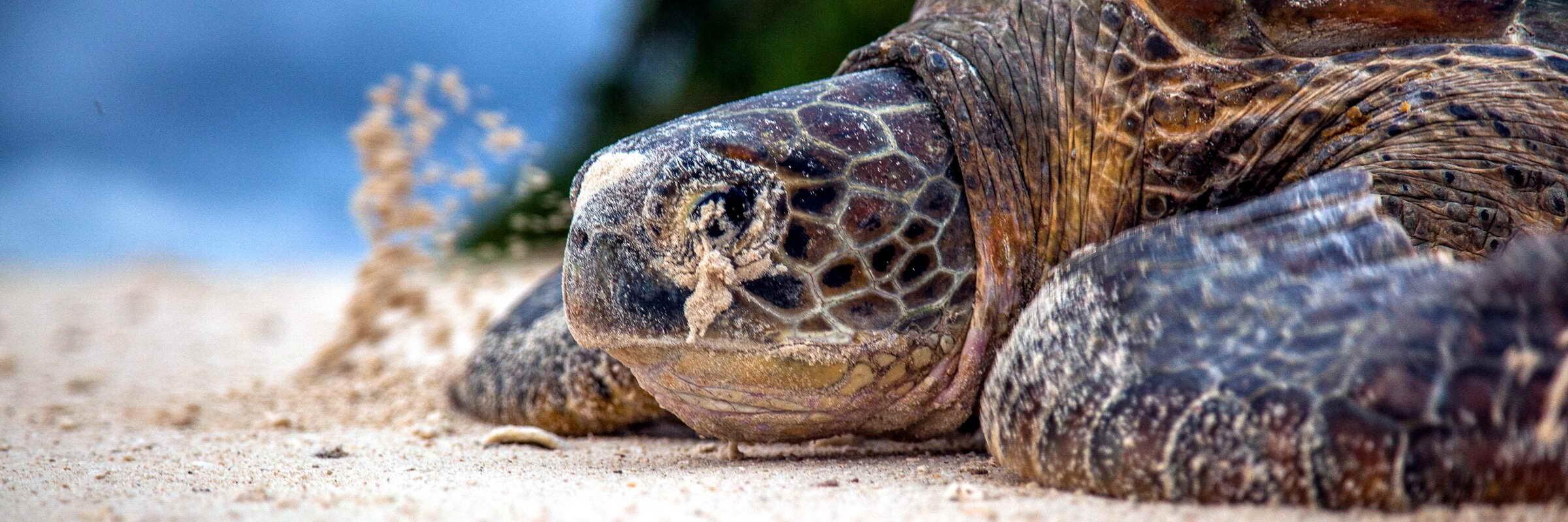 Die vielen abgelegenen Inseln in der Sulu-See dienen oft als Nistplätze für Meeresschildkröten.