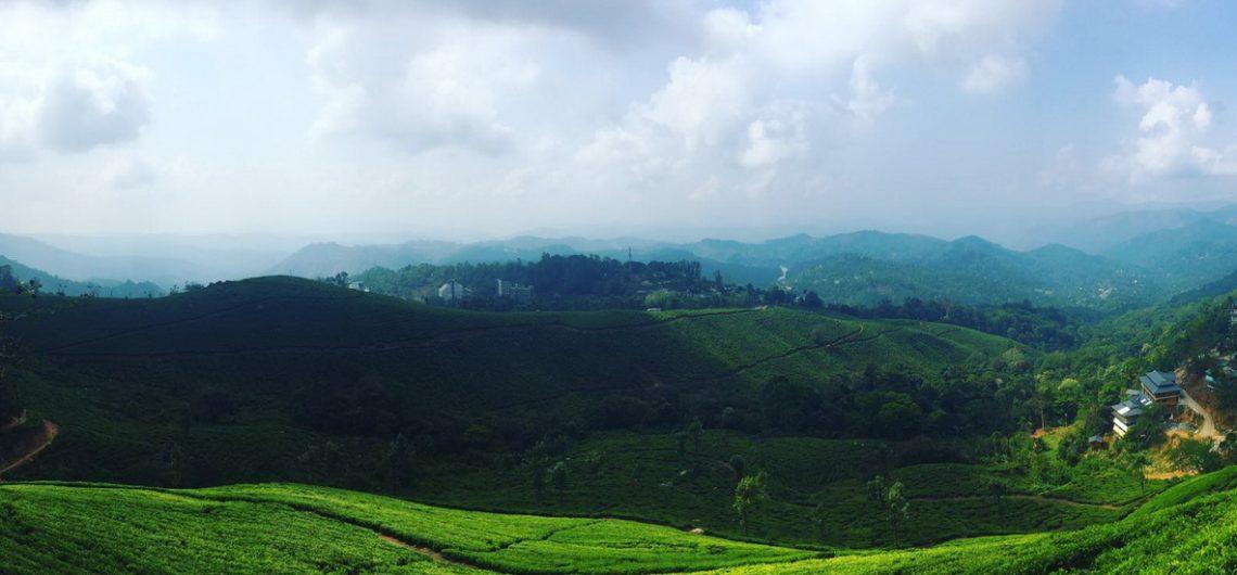 Grüne Teeplantage soweit das Auge sehen kann, in Munnar Südindien