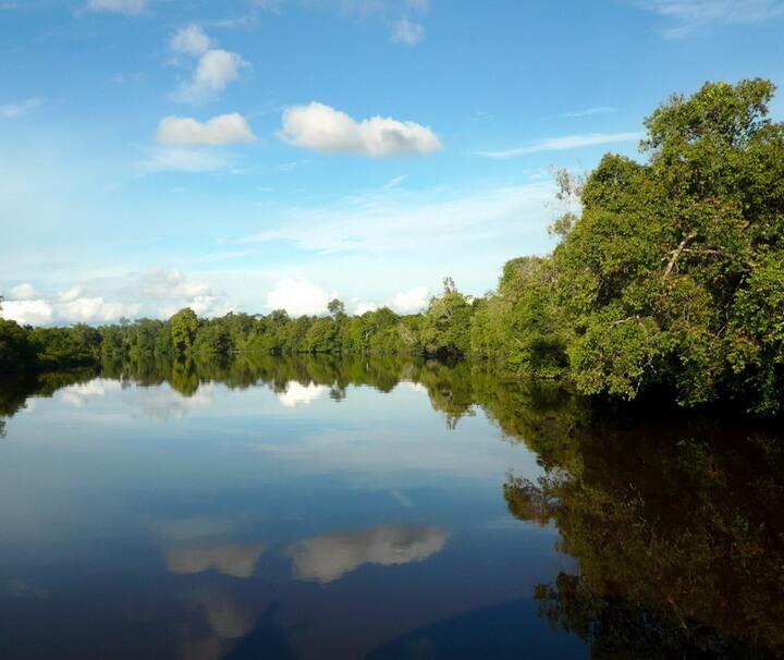 Vom Fluss aus kann der Dschungel und seine Bewohner bereits erkundet werden. Die Flüsse ersetzen in Kalimantan die Strassen.
