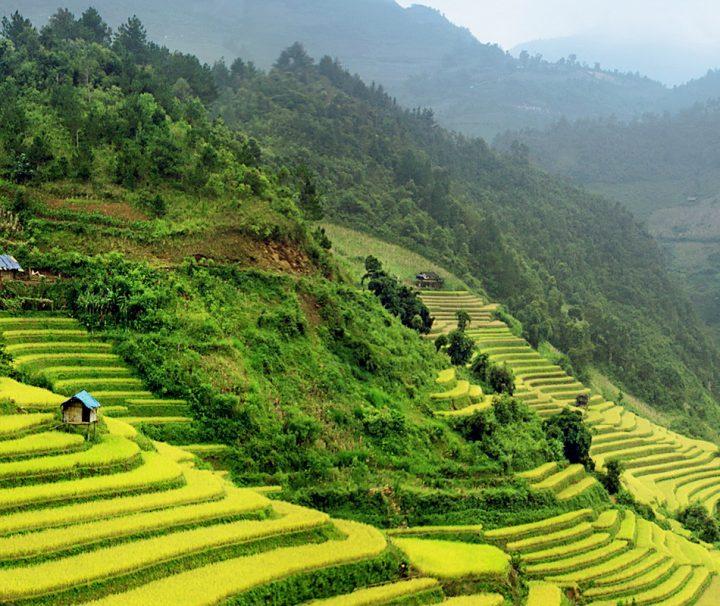 Die Landschaft um die Stadt Sapa herum ist von üppigen, grünen Reisterrassen geprägt.