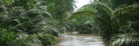 Der Mekong verfügt über viele kleine Kanäle, die nur mit dem Booten befahren werden können und in entlegenen Gegenden führen.