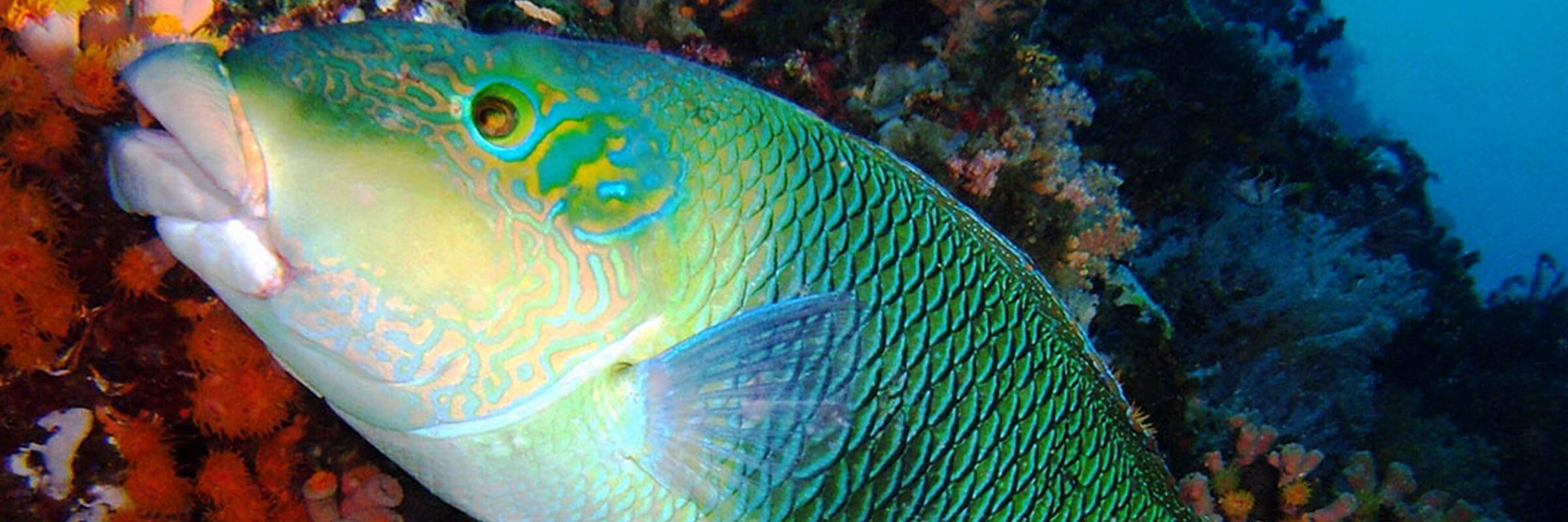 Die Gewässer rund um die Insel Palawan auf den Phlippinen sind bekannt für ihre farbenprächtige Unterwasserwelt mit reichhaltiger Flora und Fauna.