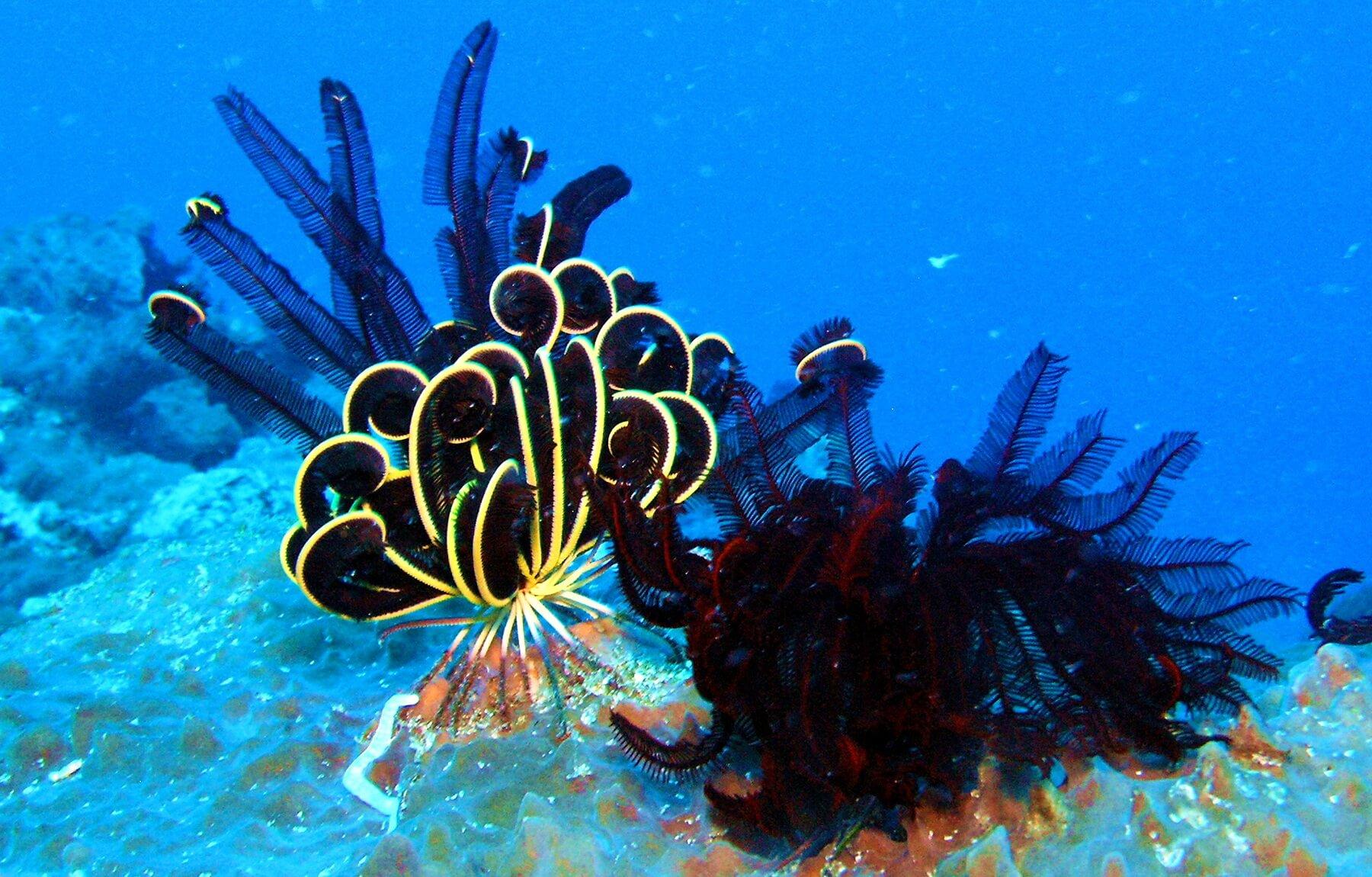 Die Gewässer rund um Bali sind für ihre hervorragenden Tauchplätze mit einzigartiger und farbenprächtiger Artenvielfalt bekannt.