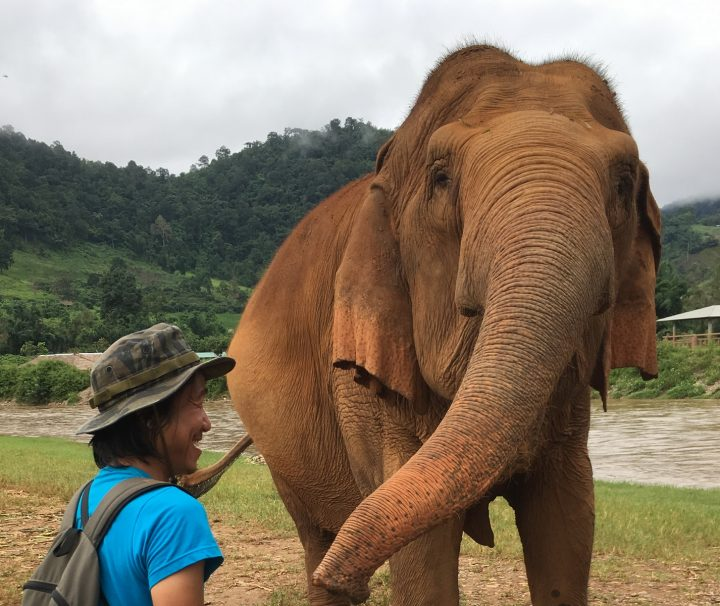 Ein Guide begleitet die Gäste durch den Elephant Nature Park in Nordthailand