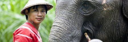 Das Elephant Hills hat sich der Haltung und dem Schutz der Elefanten verschrieben.