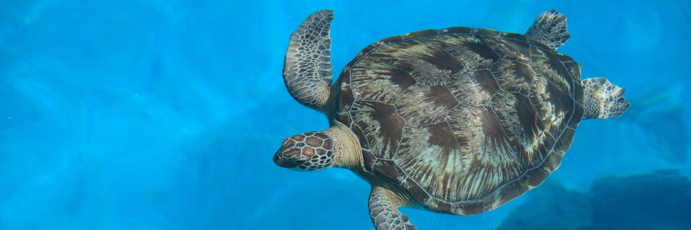 Der Similan Nationalpark verfügt über eine reichhaltige Tier- und Pflanzenwelt – Meeresschildkröten sind nur eine der vielen Gattungen, die man hier antreffen kann.