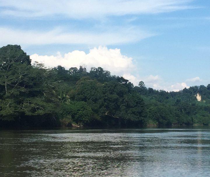 Über die Flüsse, die in Kalimantan die Straßen ersetzen, kann man tief in den Dschungel vordringen.