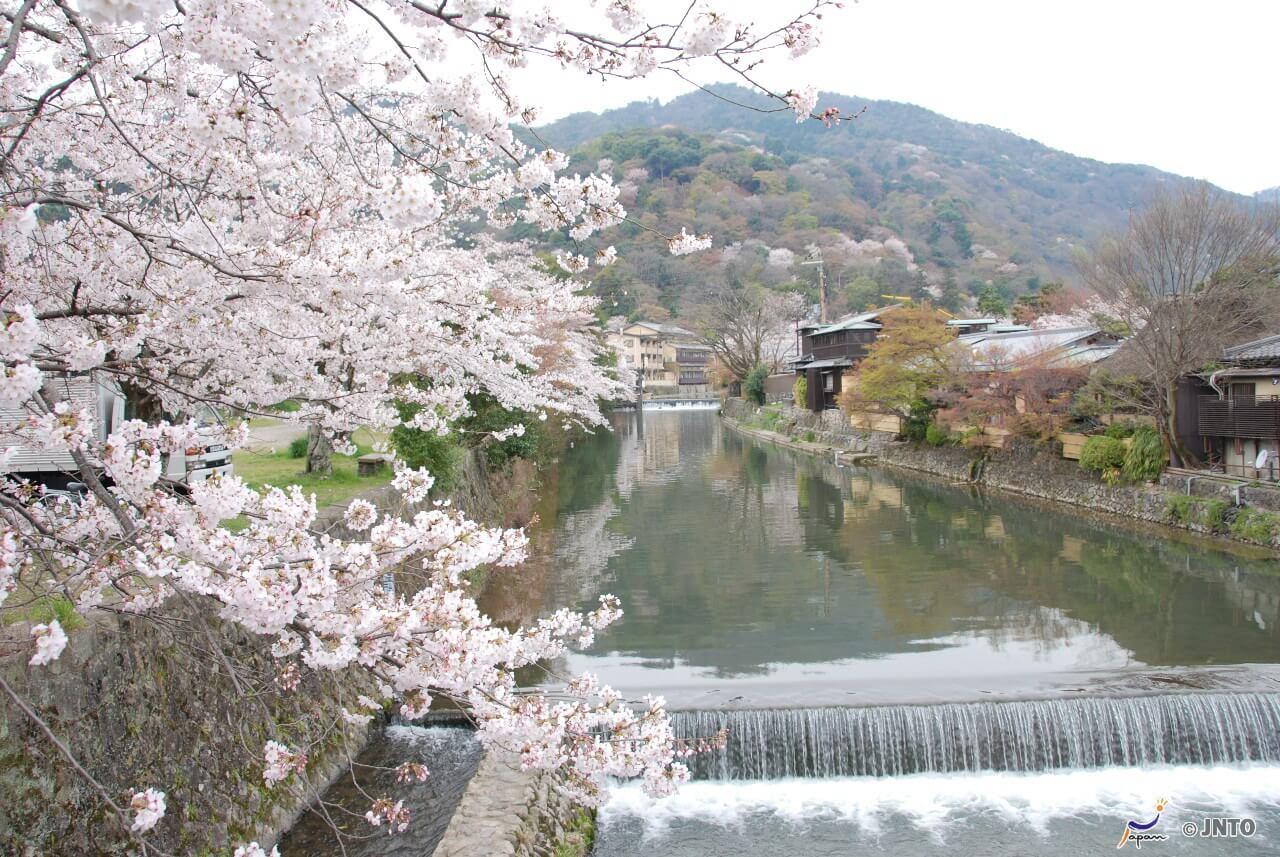 Die Kirschblüten-Zeit gehoert in Japan zu der Zeit.