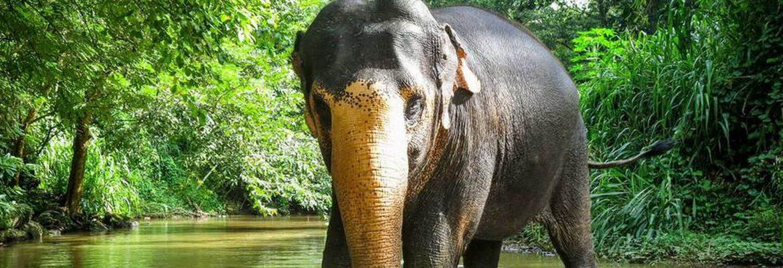 Bei einem Besuch des Elephant Freedom Project auf Sri Lanka können Besucher Elefanten aus nächster Nähe erleben, ohne dabei ihr Wesen zu stören.