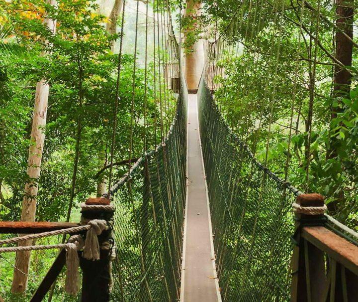 Der Canopy Walk ist ein System aus Hängebrücken, das es erlaubt, den Taman-Negara-Nationalpark auf luftiger Höhe zu durchwandern.