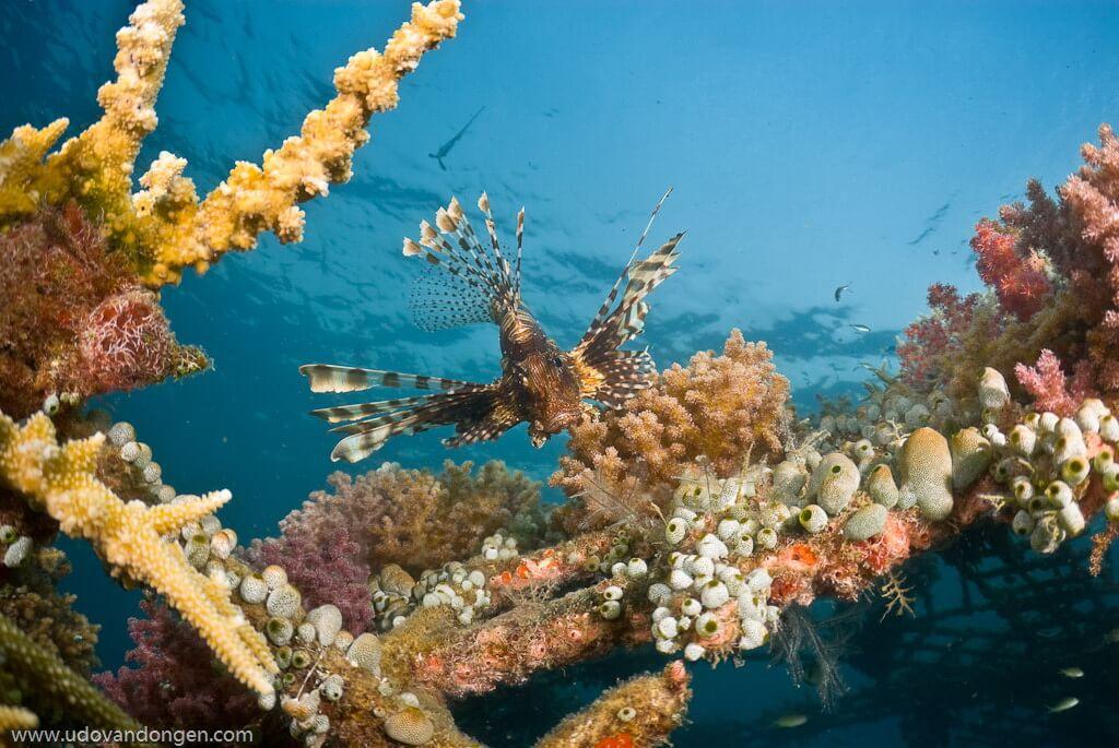 Ein Teil des Hausriffs des Pondok Sari Beach Resort & Spa ist das weltweit größte Projekt zur Korallenaufzucht.