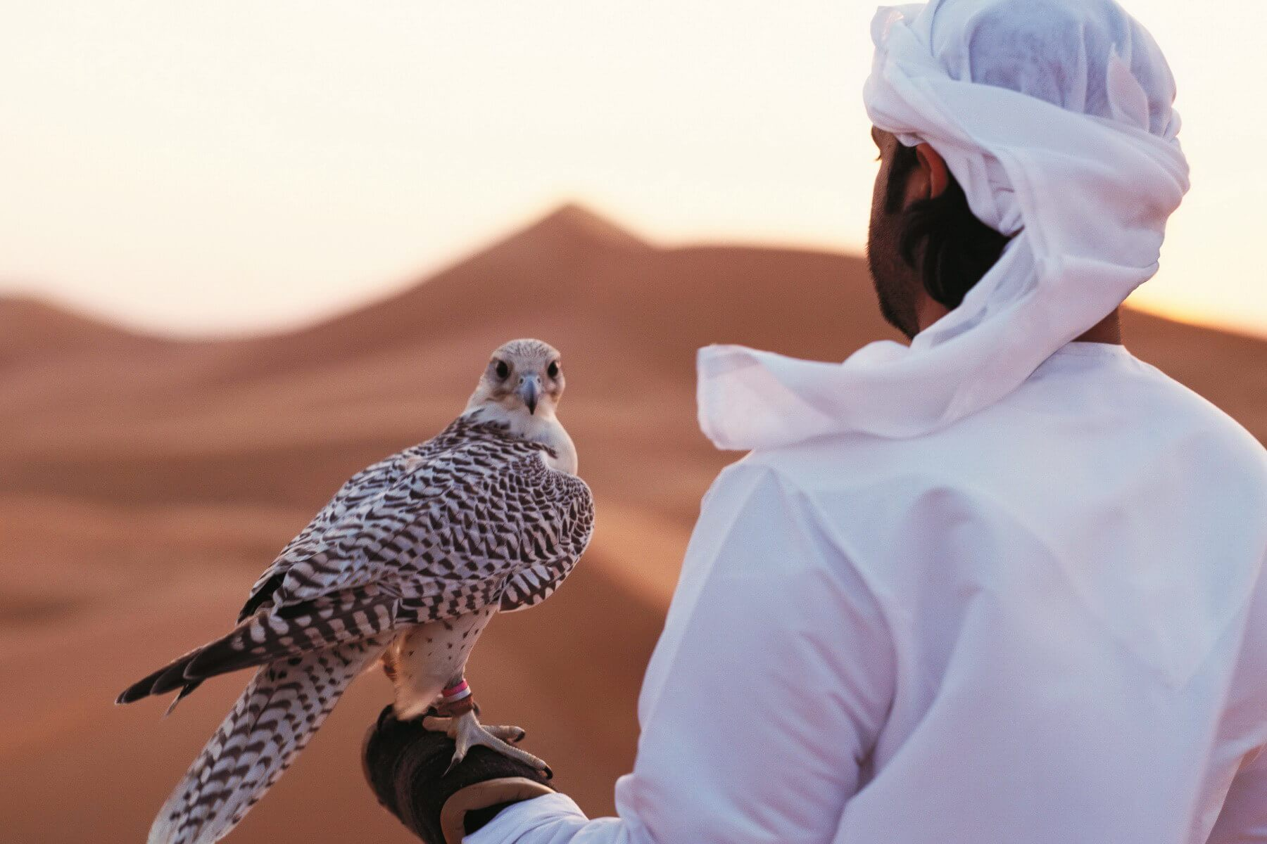 In den Emiraten gelten die Falken als die gefiederten Lieblinge der Scheichs und sind auch auf dem Wappen der Vereinigten Arabischen Emirate  zu finden.