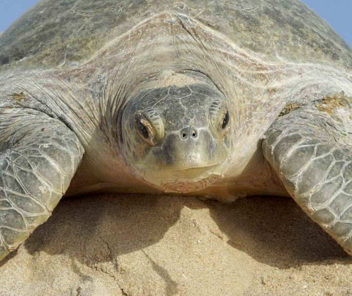 An einigen Stellen kann man ganz besonders gut Schildkröten beobachten
