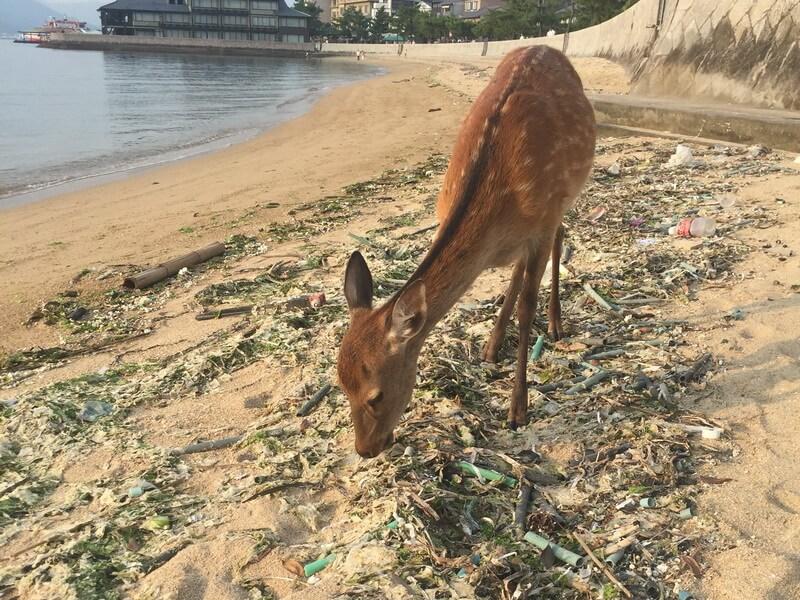 Reh an einem verschmutzten Strandabschnitt