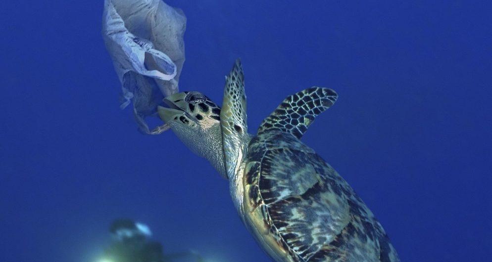 Wasserschildkröte und Plastiktüte