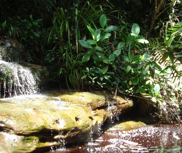 Der 1957 angelegte Bako Nationalpark ist nur ungefähr 37 km von Kuching entfernt und daher sowohl bei Einheimischen als auch bei Touristen ein beliebtes Ausflugsziel.