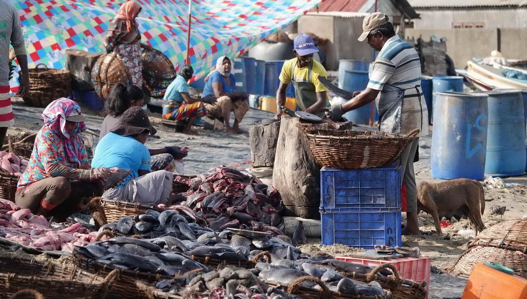 Kein klassisches Sightseeing, sondern echtes Leben: auf dem Fischmarkt in Negombo