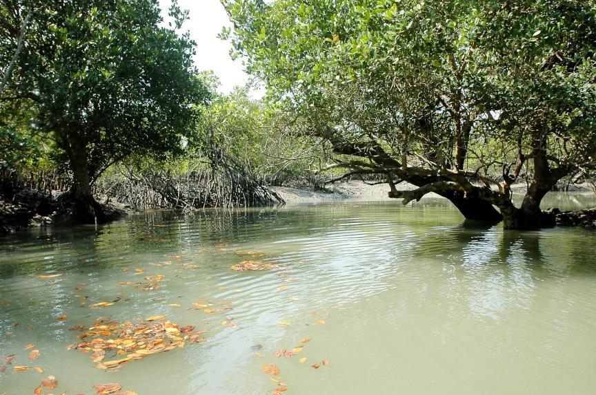 Die Sunderbans sind die größten Mangrovenwälder der Erde und der 1330 km²  große Nationalpark zählt seit 1987 zum UNESCO Weltnaturerbe.